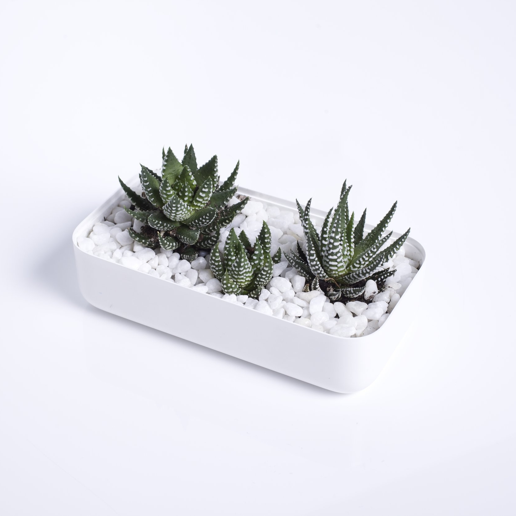 Planter - iPhone 5c box