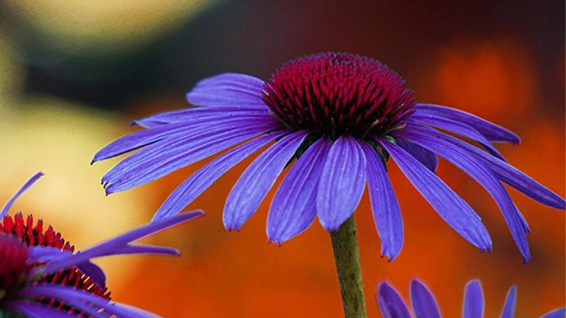 1-CONE-FlowerREV-0824.jpg