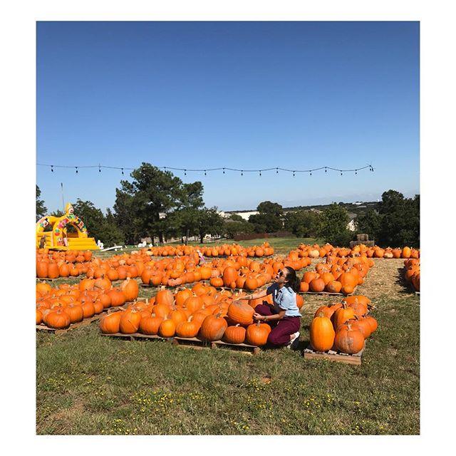 I'm going to start November by baking a huge pumpkin pie 😅  #goals #welcomenovember2017 #myfavoriteseason