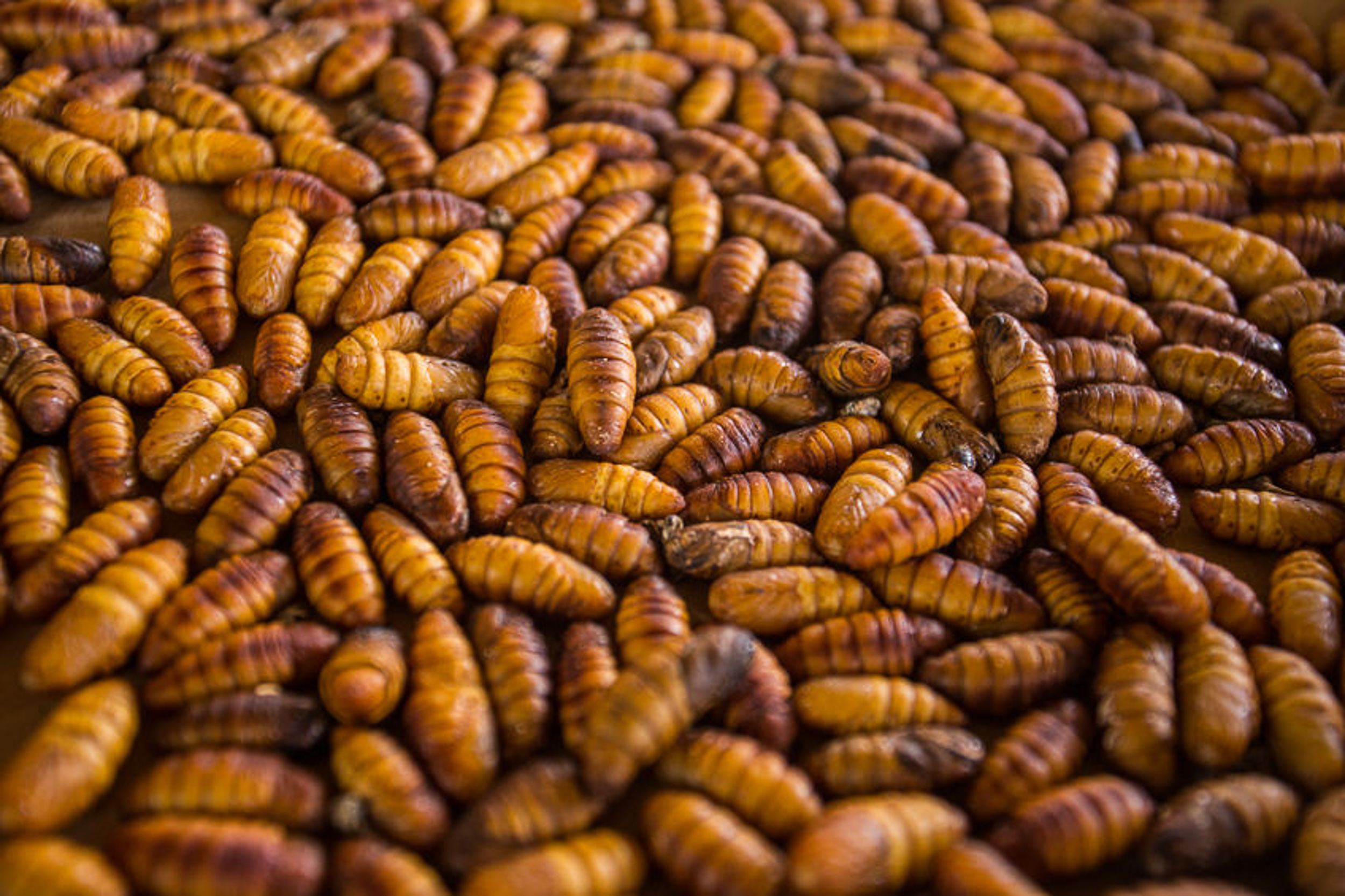 8. Steamed Silkworm Larvae - 번데기 (beondegi)