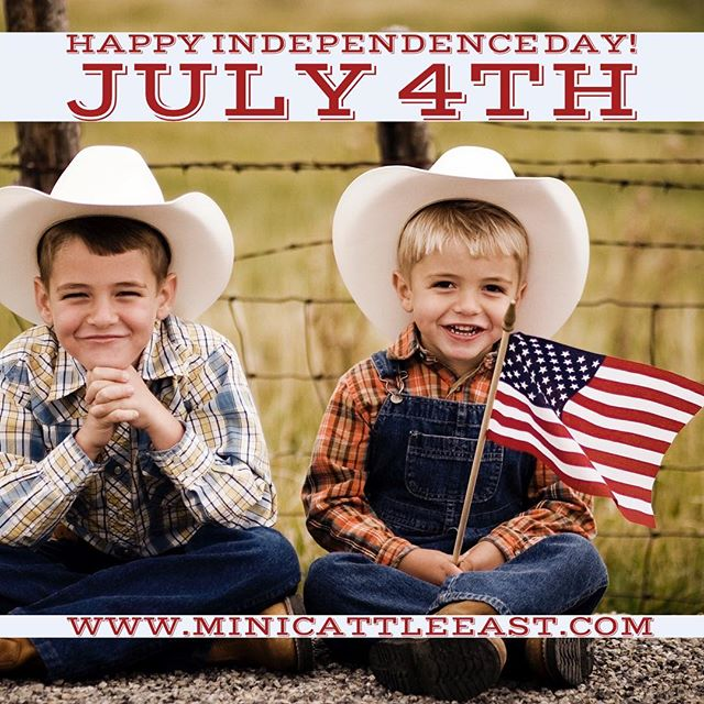 Happy 4th of July from all of us at White Mountain Miniatures!  www.MiniCattleEast.com. #cowsofinstagram #july4th #independenceday #farmersmarket #homestead #american #family #ffa #newhampshire #newhampshirelife #minicows #freshmilk #freshfood