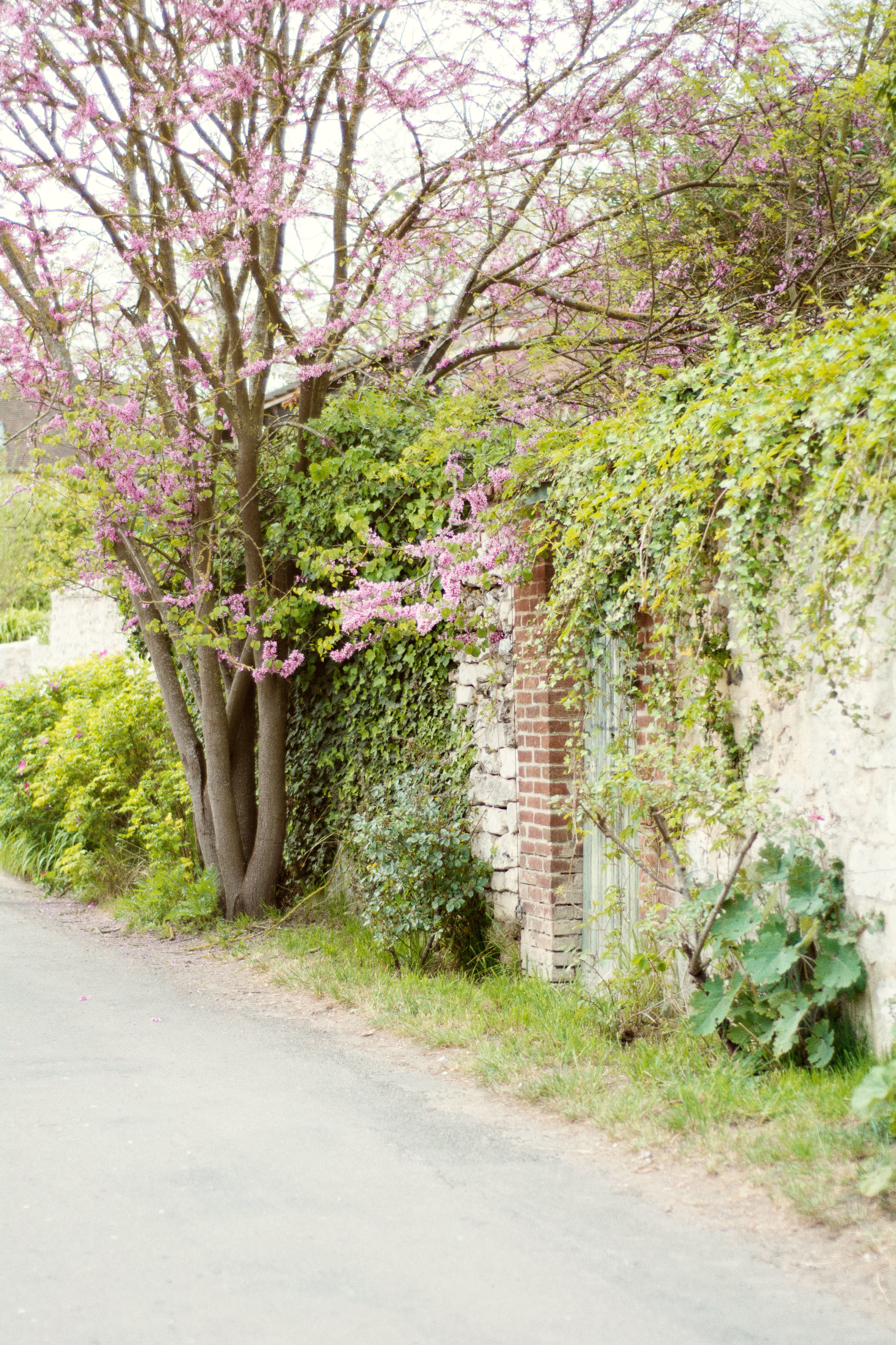 Giverny France | Photo by Annie Mertlich