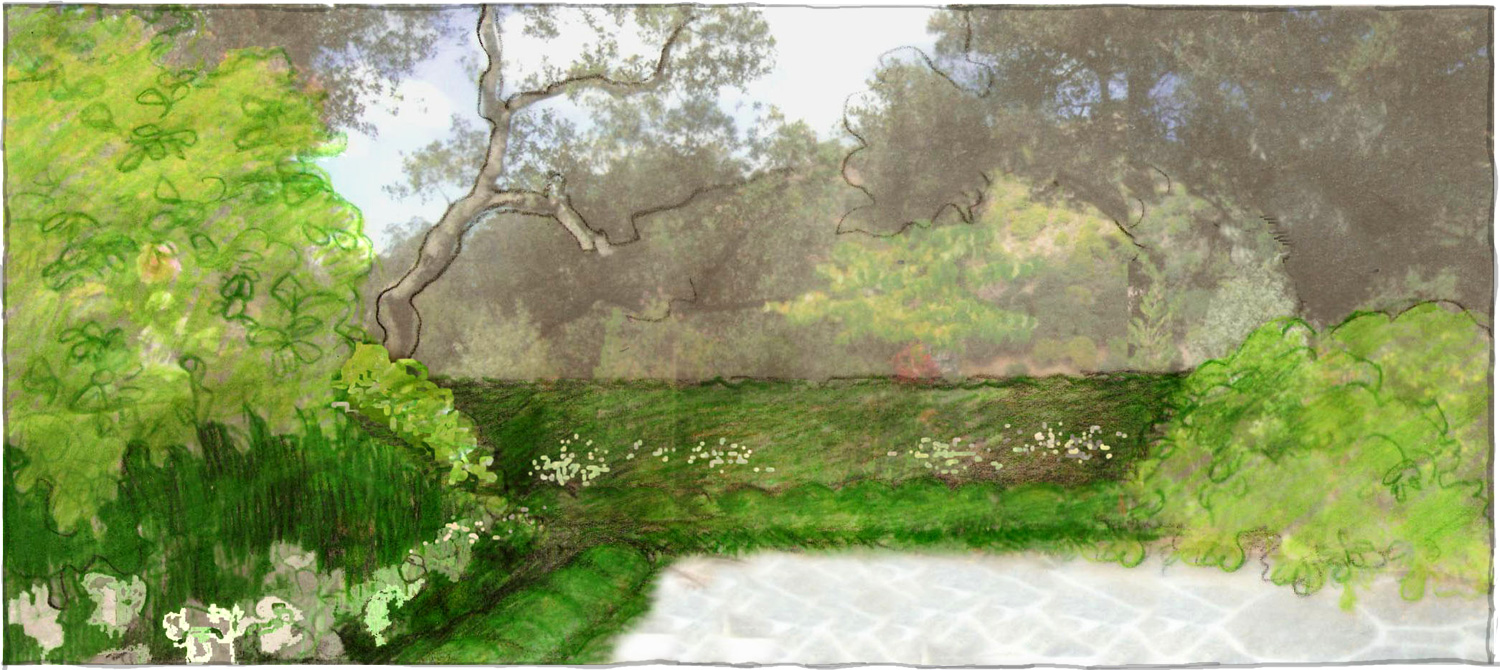 Sketch of the Oaks and rolling hillside to the sea framed with hedging, interspersed with softer Choisya and Blossoming Current shrubs. Anemone, Hellebore and Agapanthus flowers were chosen to create flower beds for an ongoing seasonal floral display.