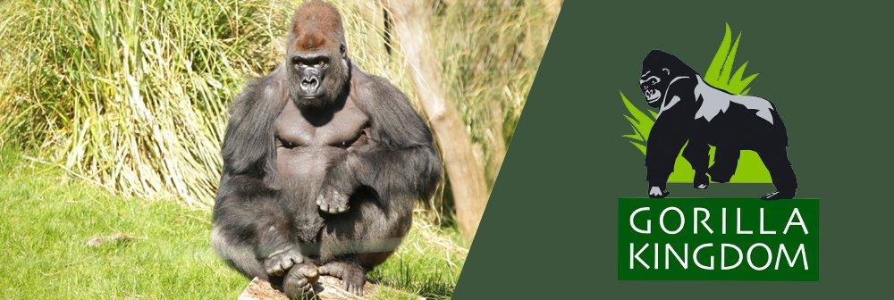 london zoo gorillas 1