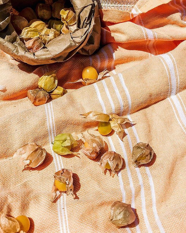 A day at the beach // #mostlyeats #groundcherries #forttilden
