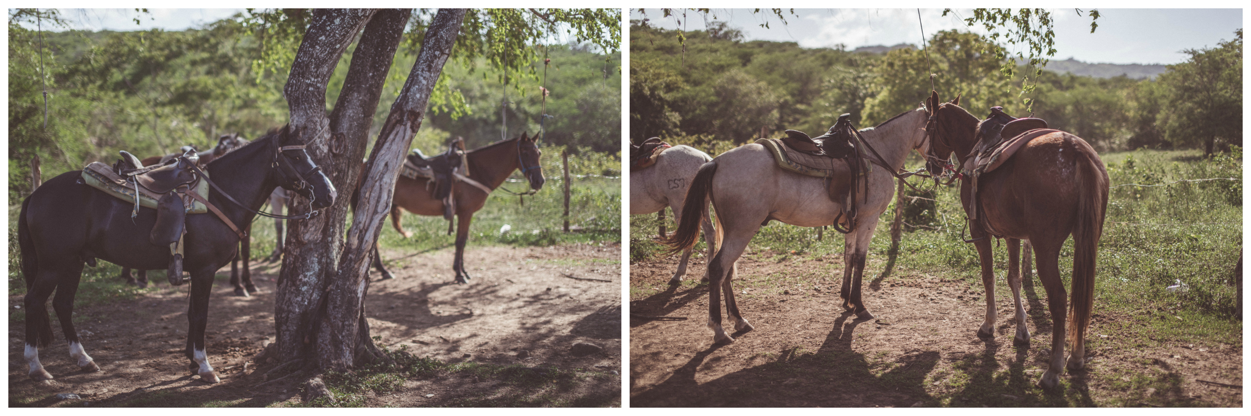 horse rest.jpg
