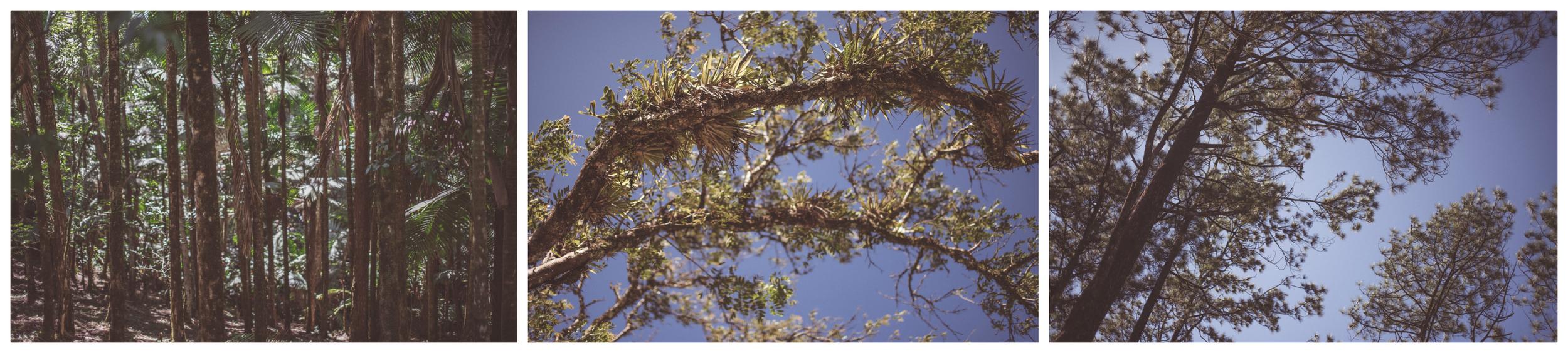 trail details 4.jpg