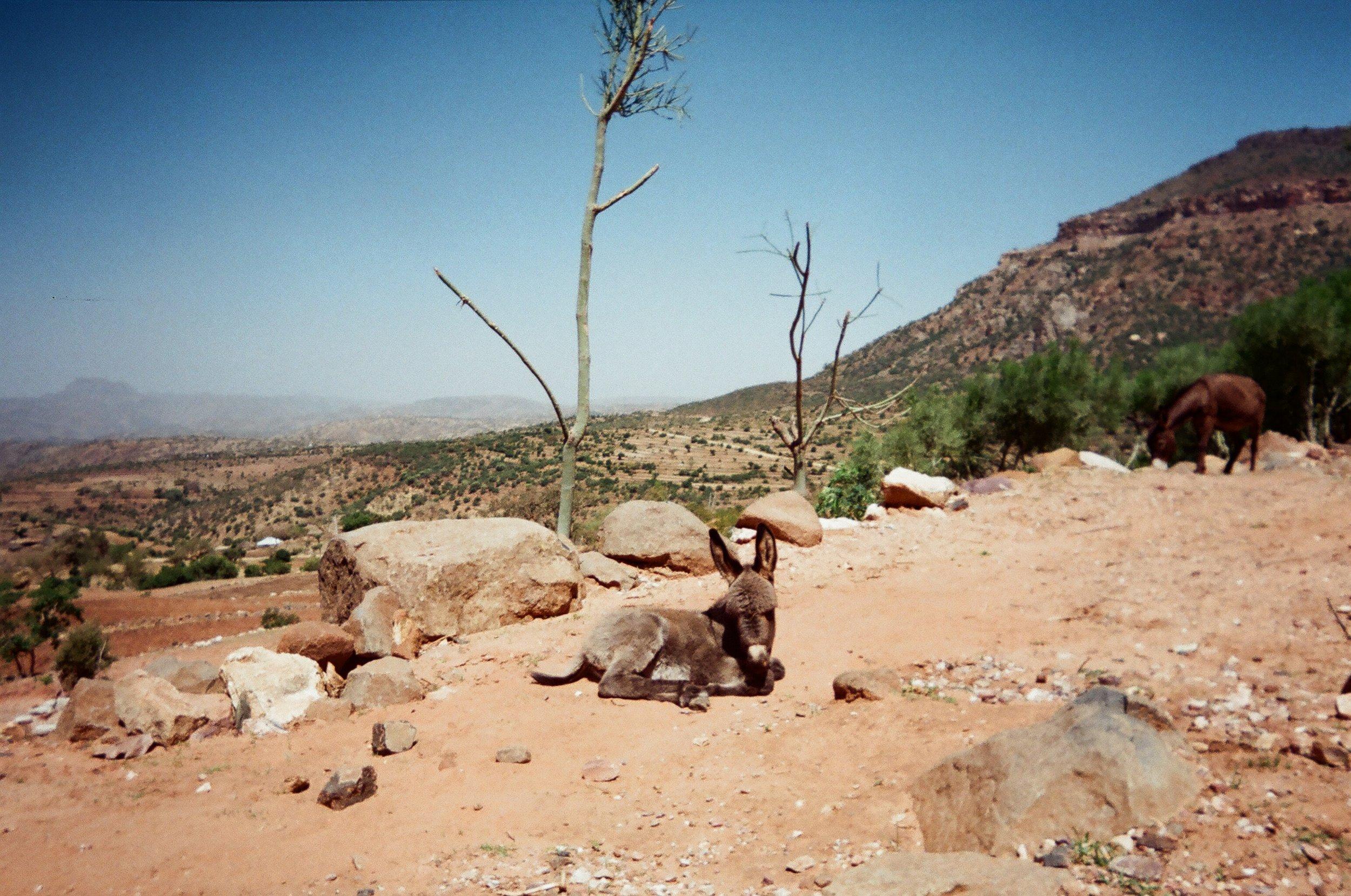 Ethiopia7.JPG