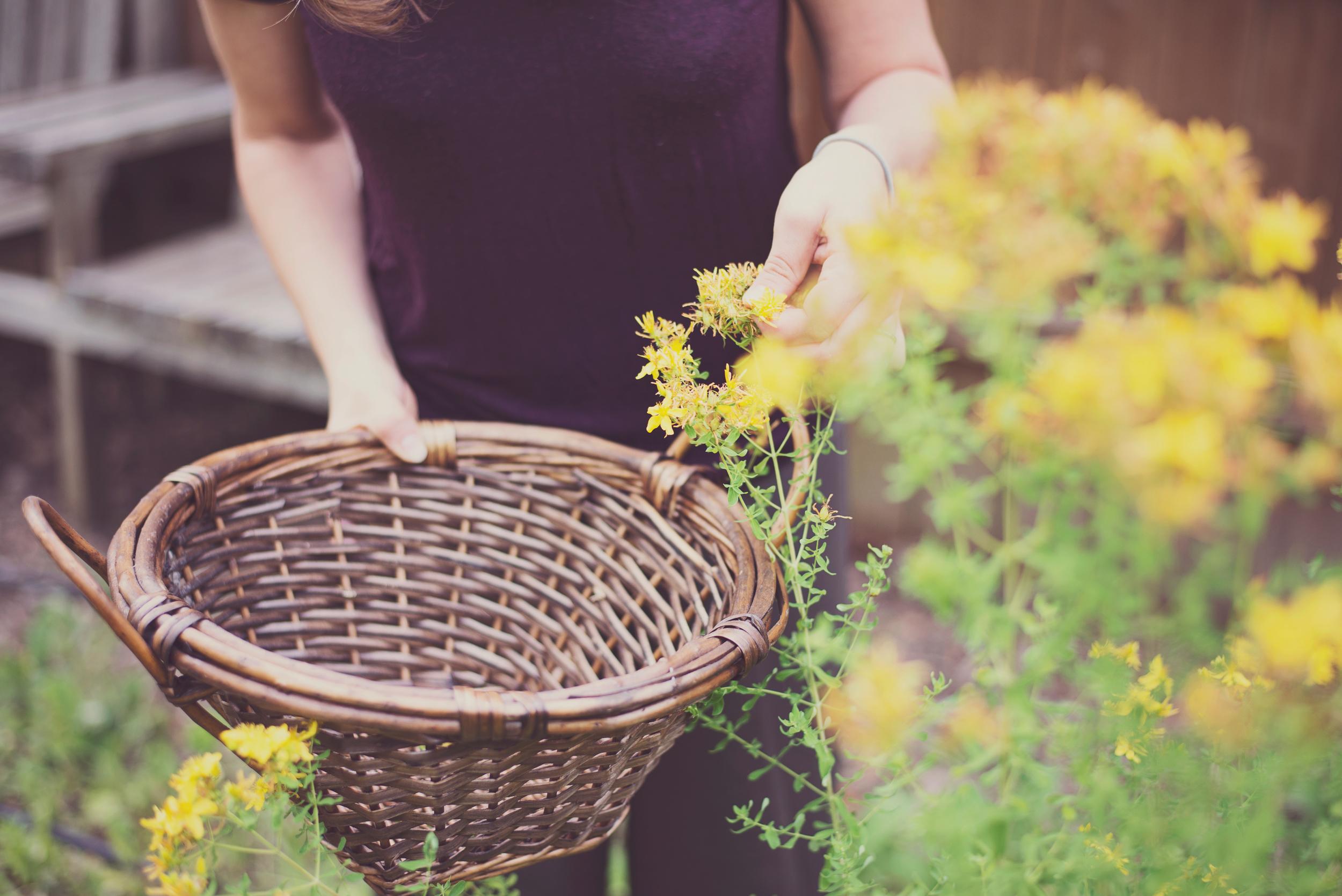 cordella_mickelberry_gardens.jpg