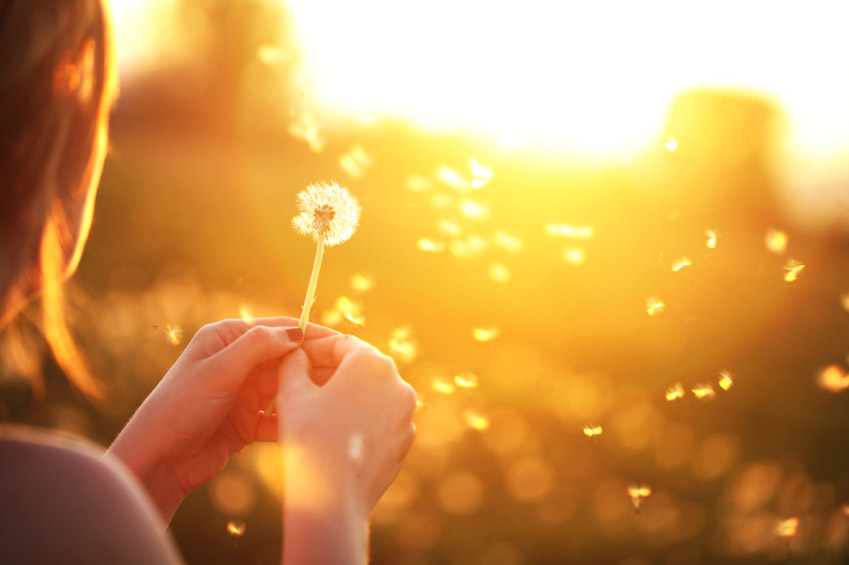 dandelion.womansunlight2.jpg