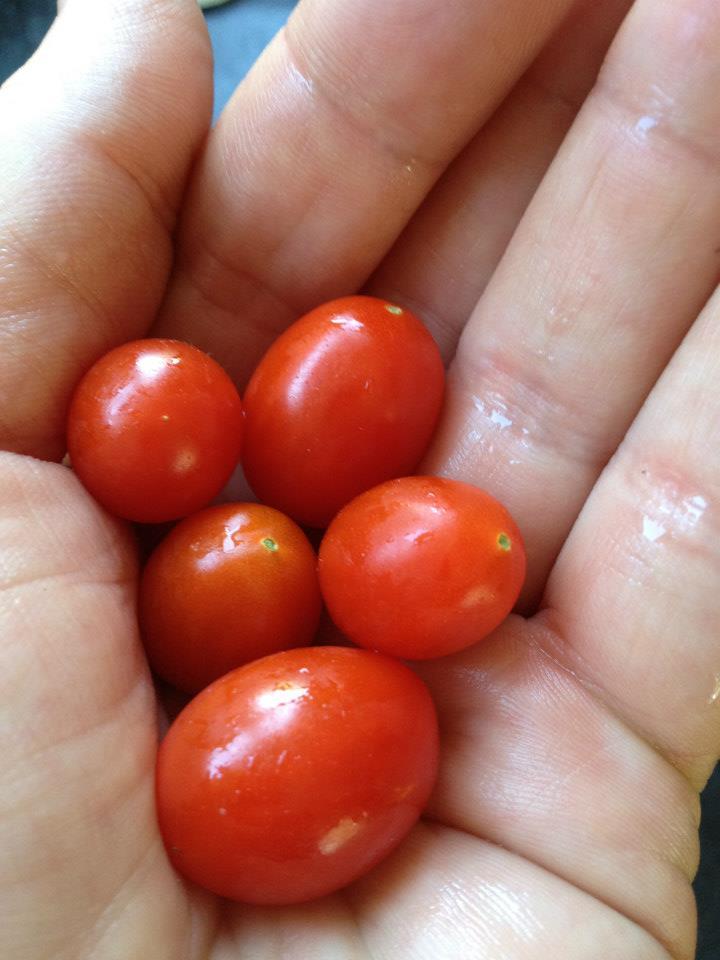 Grow grape tomatoes.