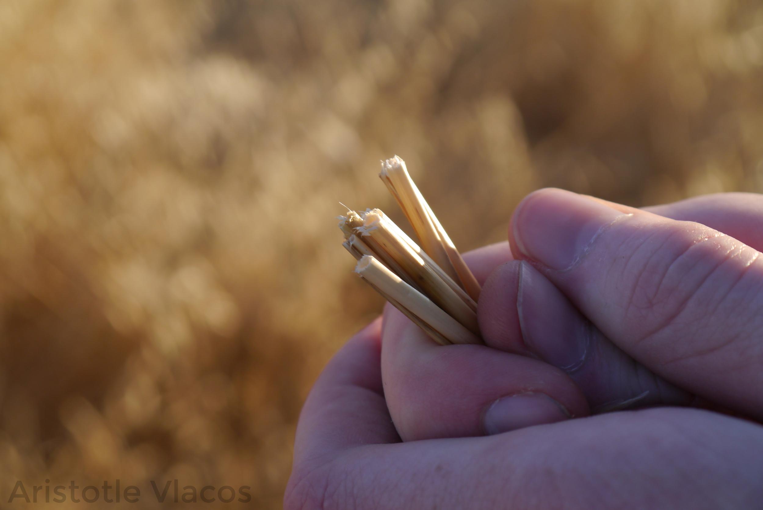 straw_hands.jpg