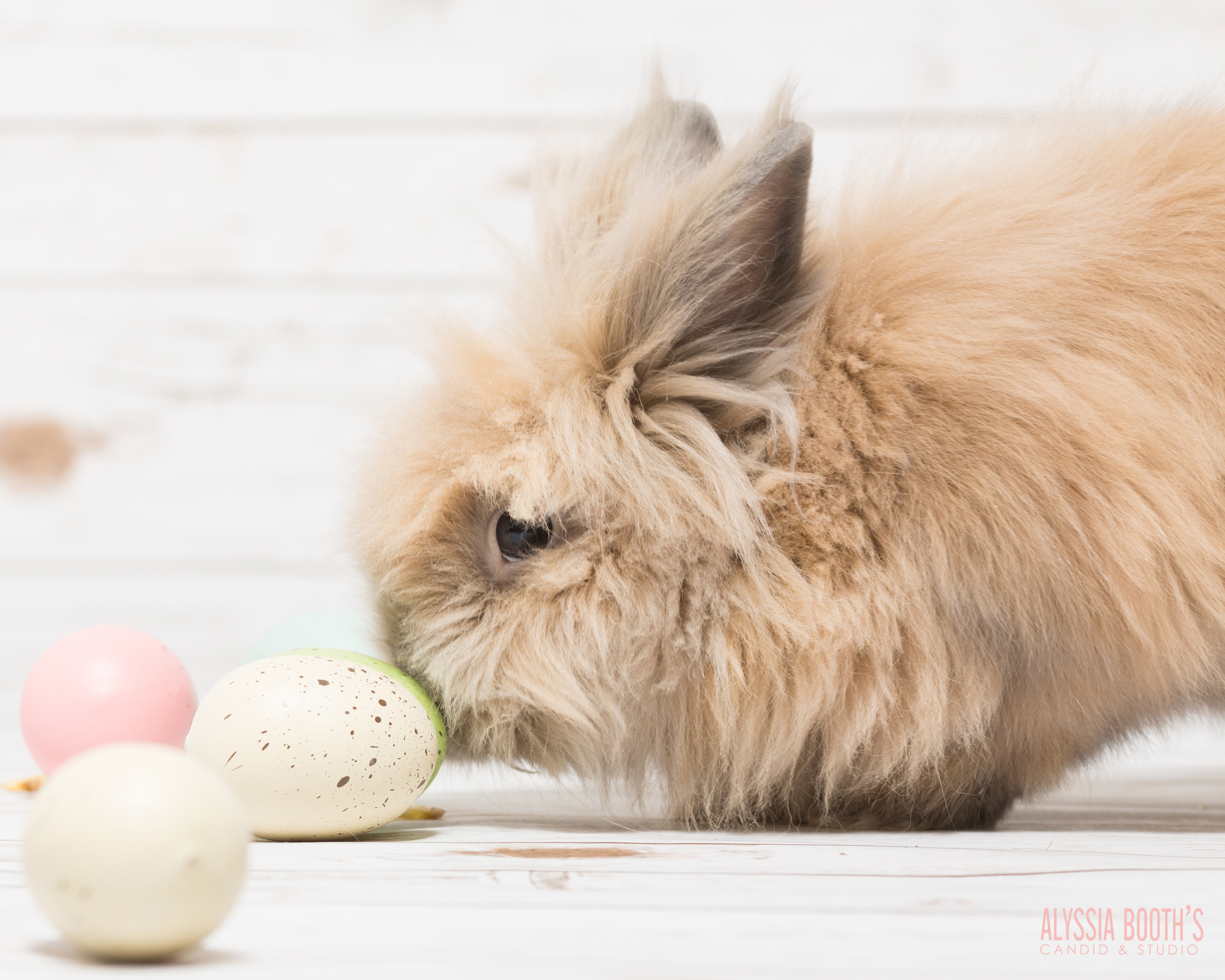 Easter Bunny | Alyssia Booth's Candid & Studio