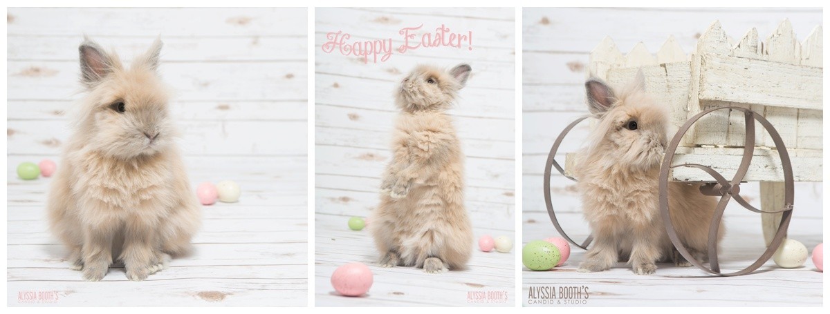 Easter Bunny | Alyssia Booth's Candid & Studio | East Lansing Photographer