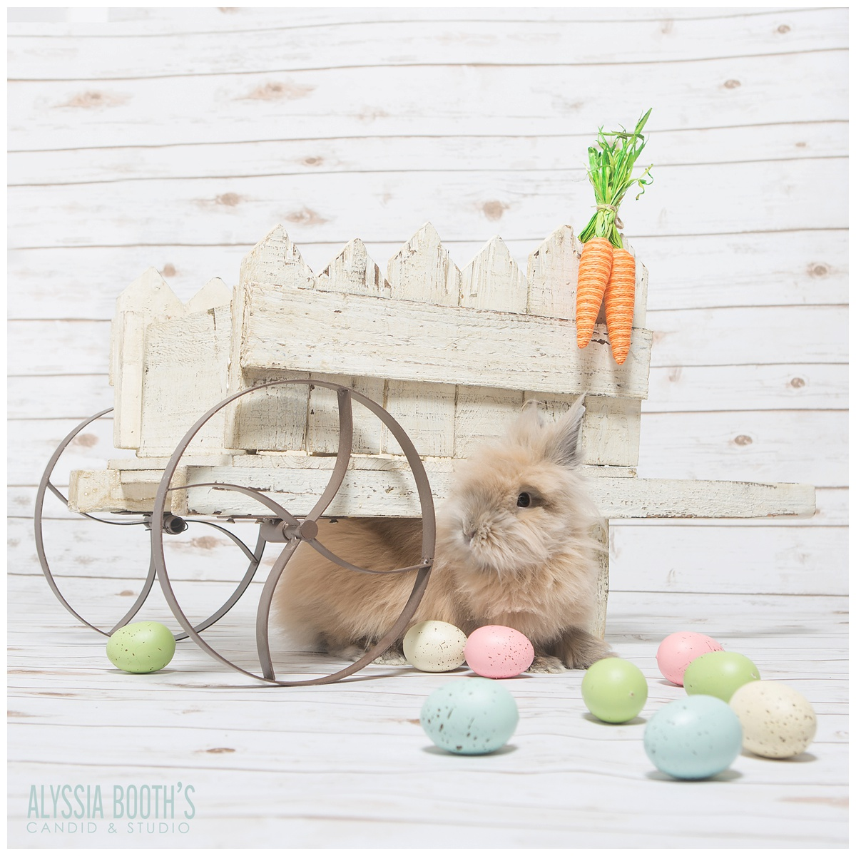 Chai Bunny | Easter Bunny | Alyssia Booth's Candid & Studio | East Lansing Photographer