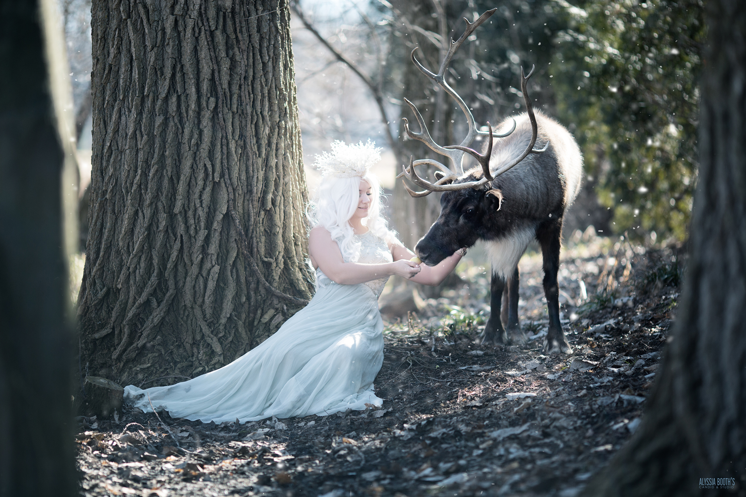 Winter's Reindeer | Alyssia Booth Photographer | www.abcandidstudio.com