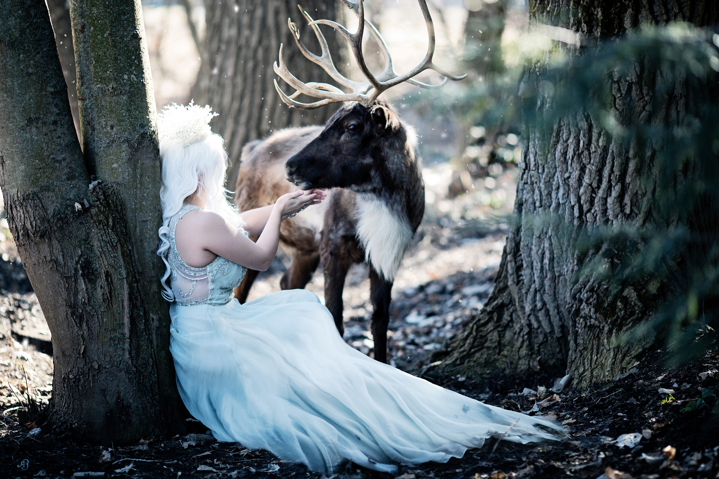 Reindeer Shoot | Alyssia Booth Photographer | www.abcandidstudio.com