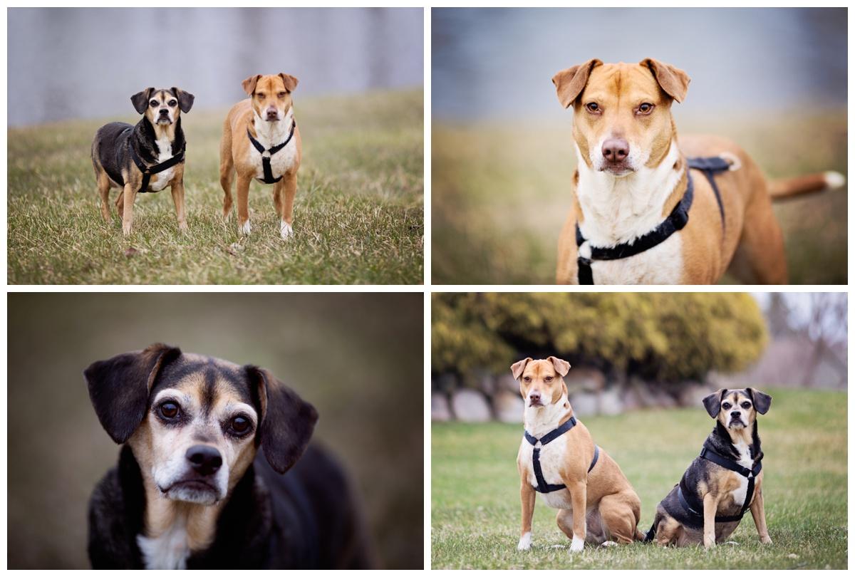 Pets | Family Photo Session | Michigan | Alyssia Booth's Candid & Studio