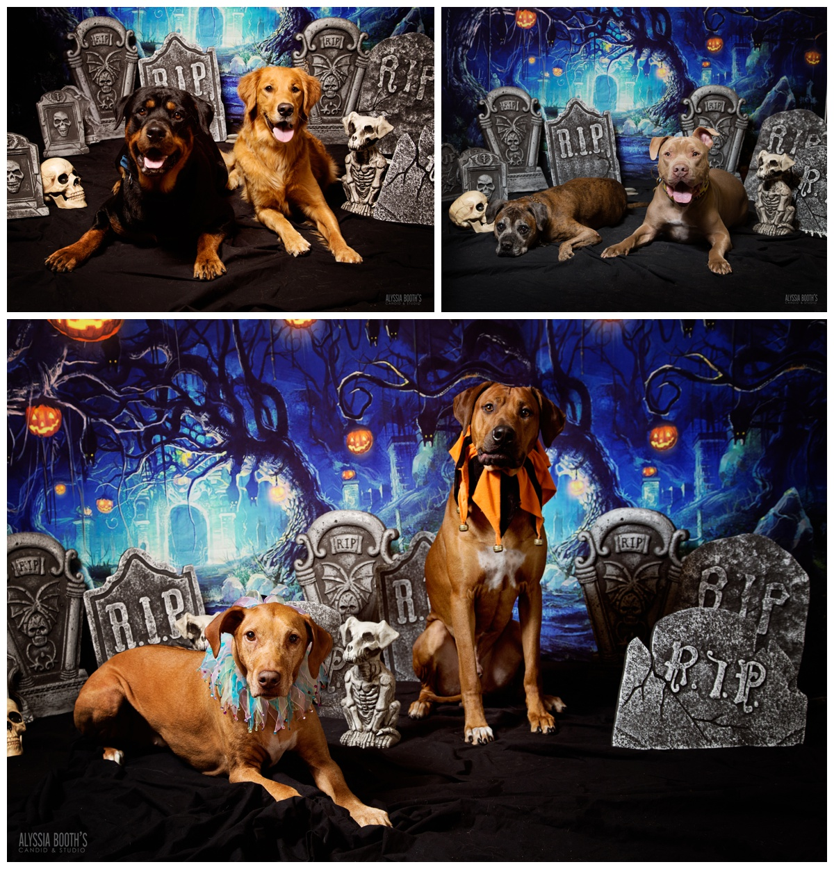 Dogs Photo Shoot | Halloween Pets |  www.abcandidstudio.com | Alyssia Booth's Candid & Studio | Michigan Pet Photographer