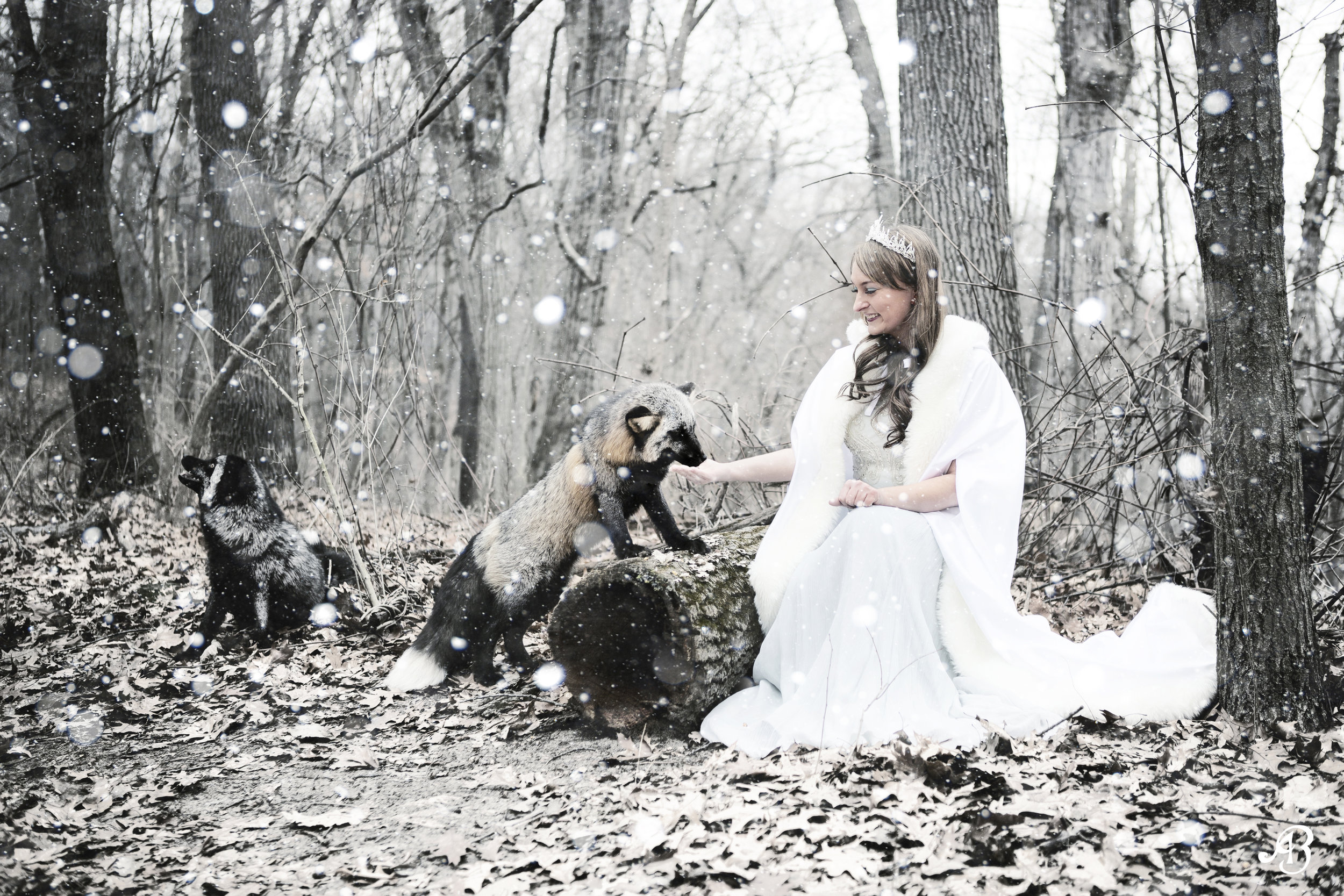Aimee with Foxes and Snow | Photoshoot with Foxes | Animal Encounters | Alyssia Booth's Candid & Studio | Michigan Photographer | Fantasy Photoshoots | www.abcandidstudio.com