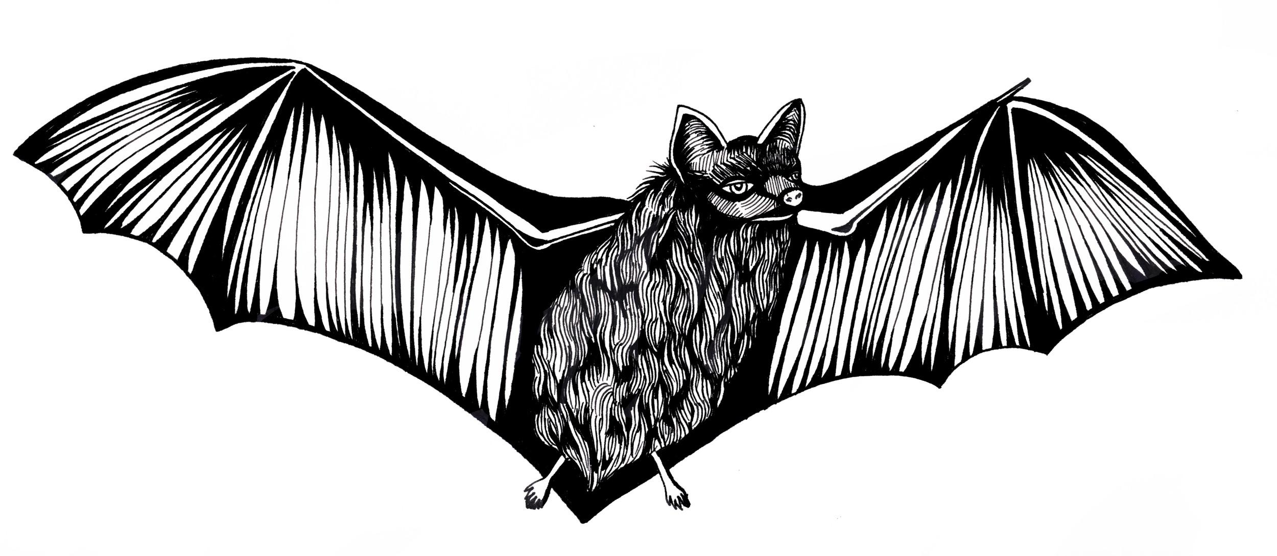 bat drawing.jpg