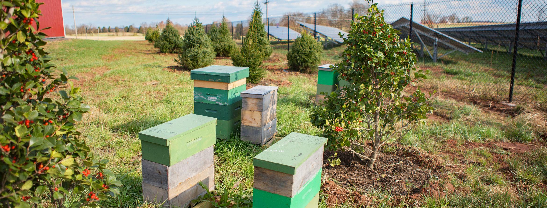NY-solar-farm-pollinator-habitat-honeybee-boxes-panels-H.jpg