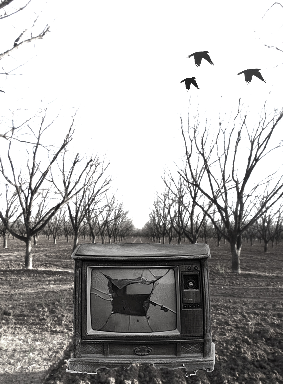 Television-Trees-3-29.jpg