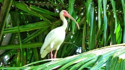 thumbs_kokopelli-sierpe-kokopelli-sierpe-restaurant-tours-mangrove-corcovado-nature-sierpe-tour-14.jpg