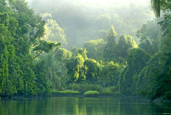 Corcovado-forest11.jpg