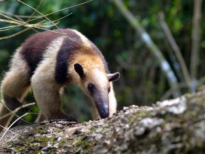 corcovado-national-park-3.jpg