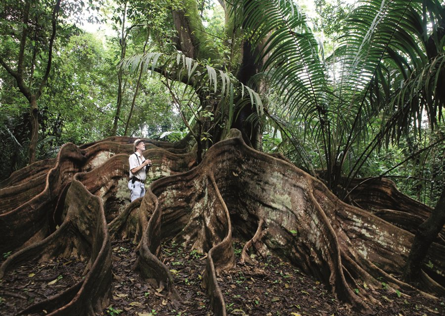 39dfc12a-0b45-4df9-9c0f-a92a7f244813.CostaRica-South-Dominical-Rainforest-Roots.jpg