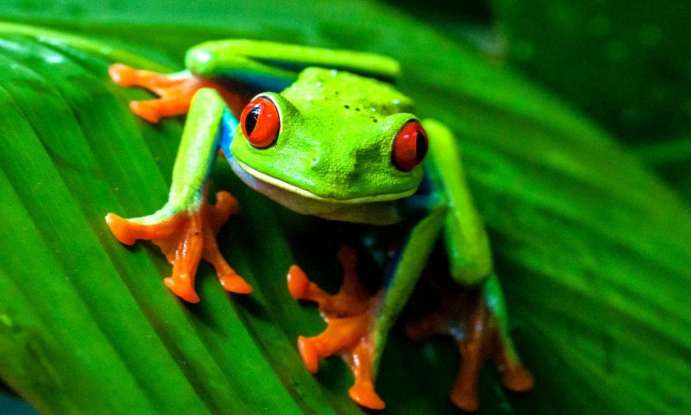 Costa-Rica-animals.jpg