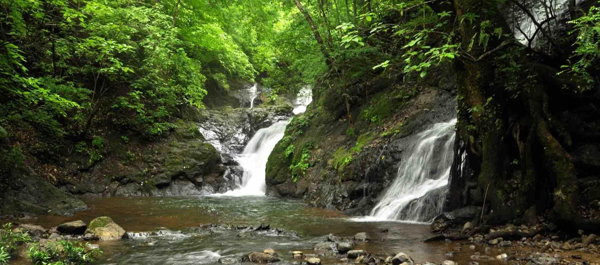 Nature Splash.jpg
