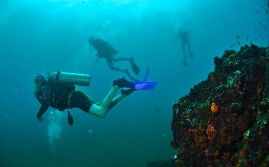 diving-at-marino-ballena.jpg
