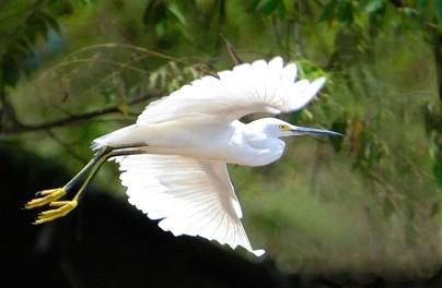 bird_watch_hike_pi_1g.jpg