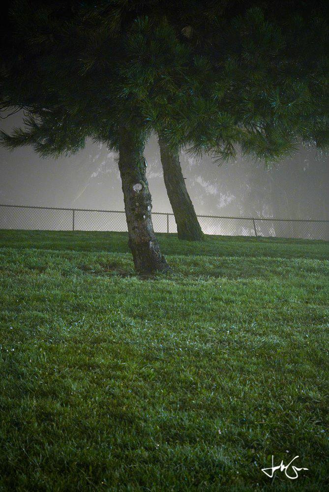 Tree fence-6.jpg