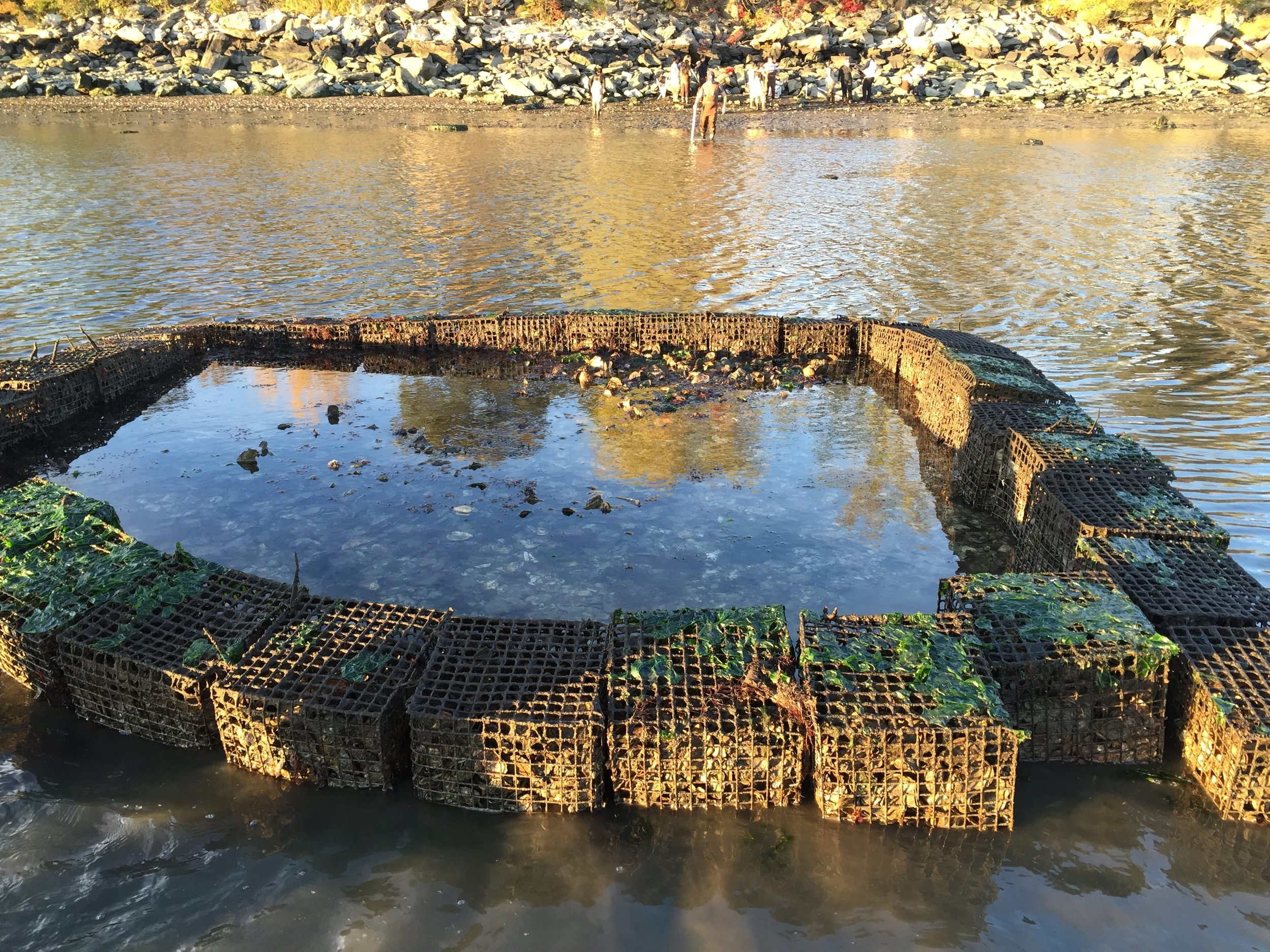 A Gabion at Low Tide: You Can See the Square Structure, Photo Credit: Liz Summit, 2015