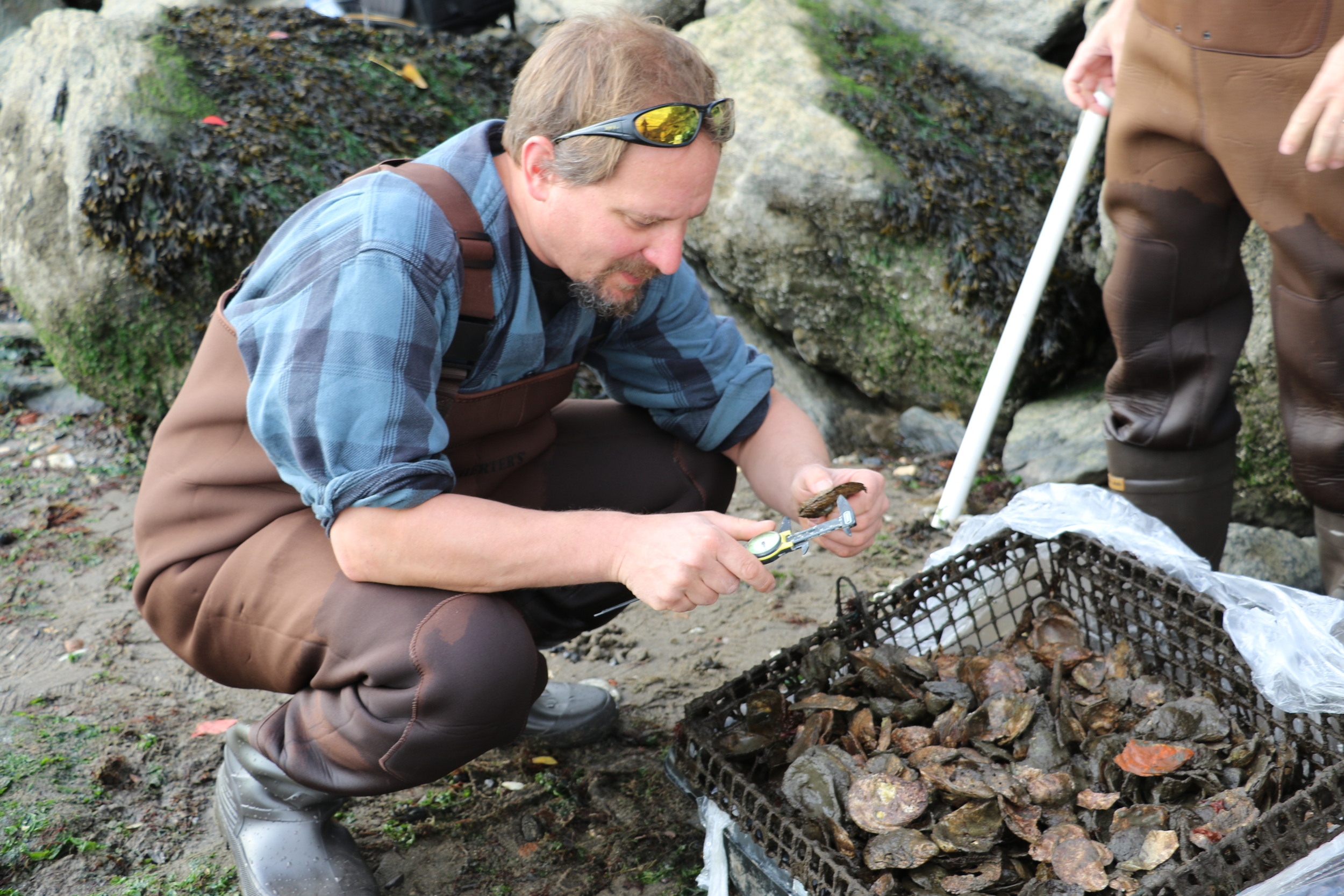 Measuring the Size of Oysters, Photo Credit: Liz Summit, 2015