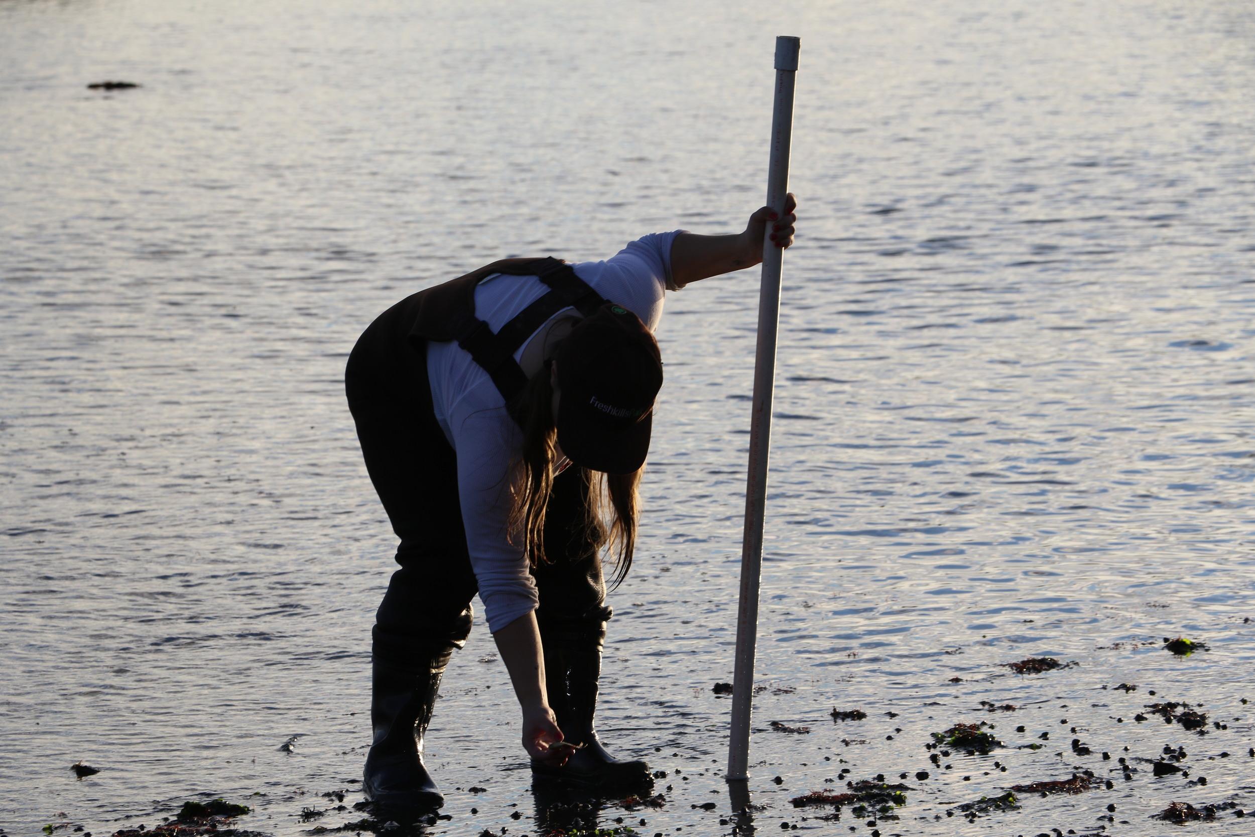 Examining the Shore, Photo Credit: Liz Summit, 2015