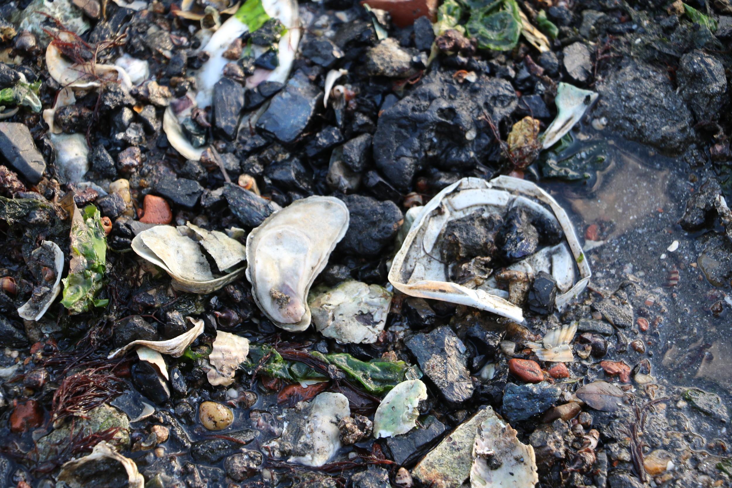 Shells and a Plastic Coffee Lid, Photo Credit: Liz Summit, 2015
