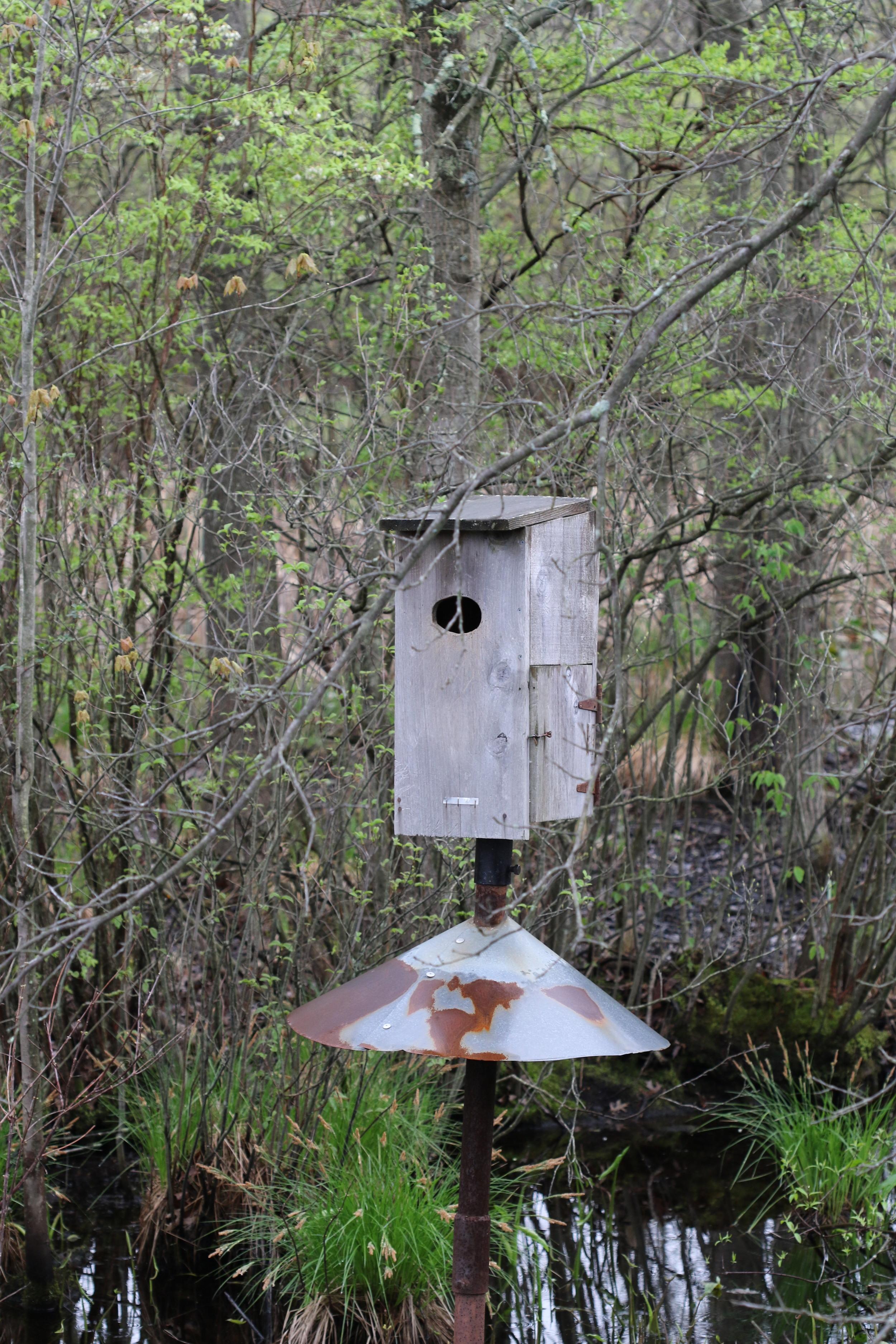 Nest Box for Wood Ducks