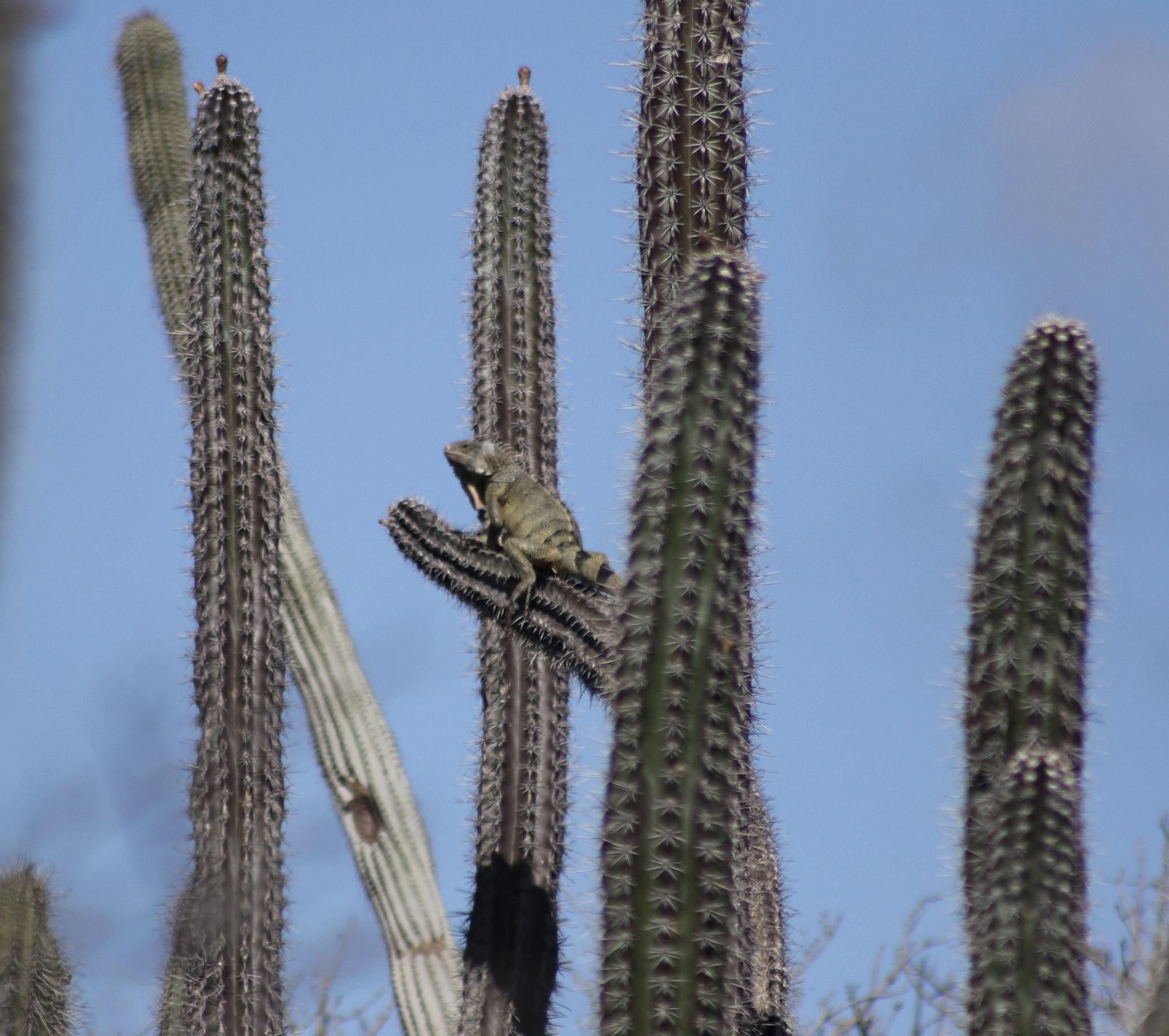 Cactus Surfing