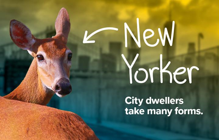 NYCP17-WildlifeNYC-SpringCampaign-Website-Hero-Image-v2.jpg