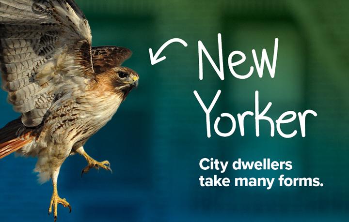 NYCP17-WildlifeNYC-SpringCampaign-Website-Hero-Image2-v2.jpg