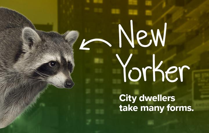 NYCP17-WildlifeNYC-SpringCampaign-Website-Hero-Image4-v2.jpg