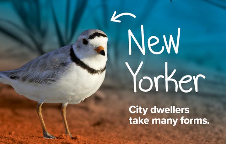 NYCP17-WildlifeNYC-SpringCampaign-Website-Hero-Image5-v2.jpg
