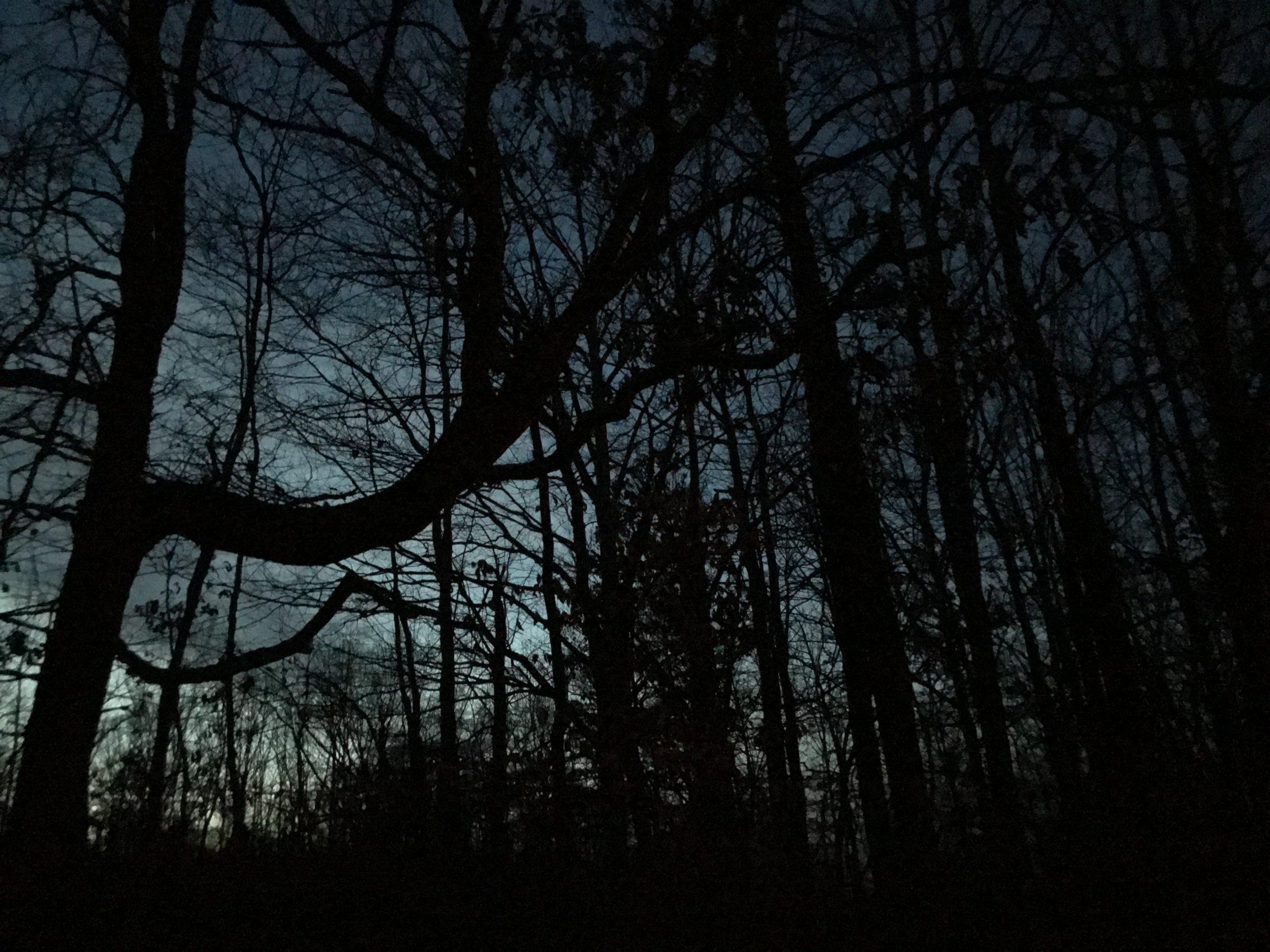 The Darkening Woods