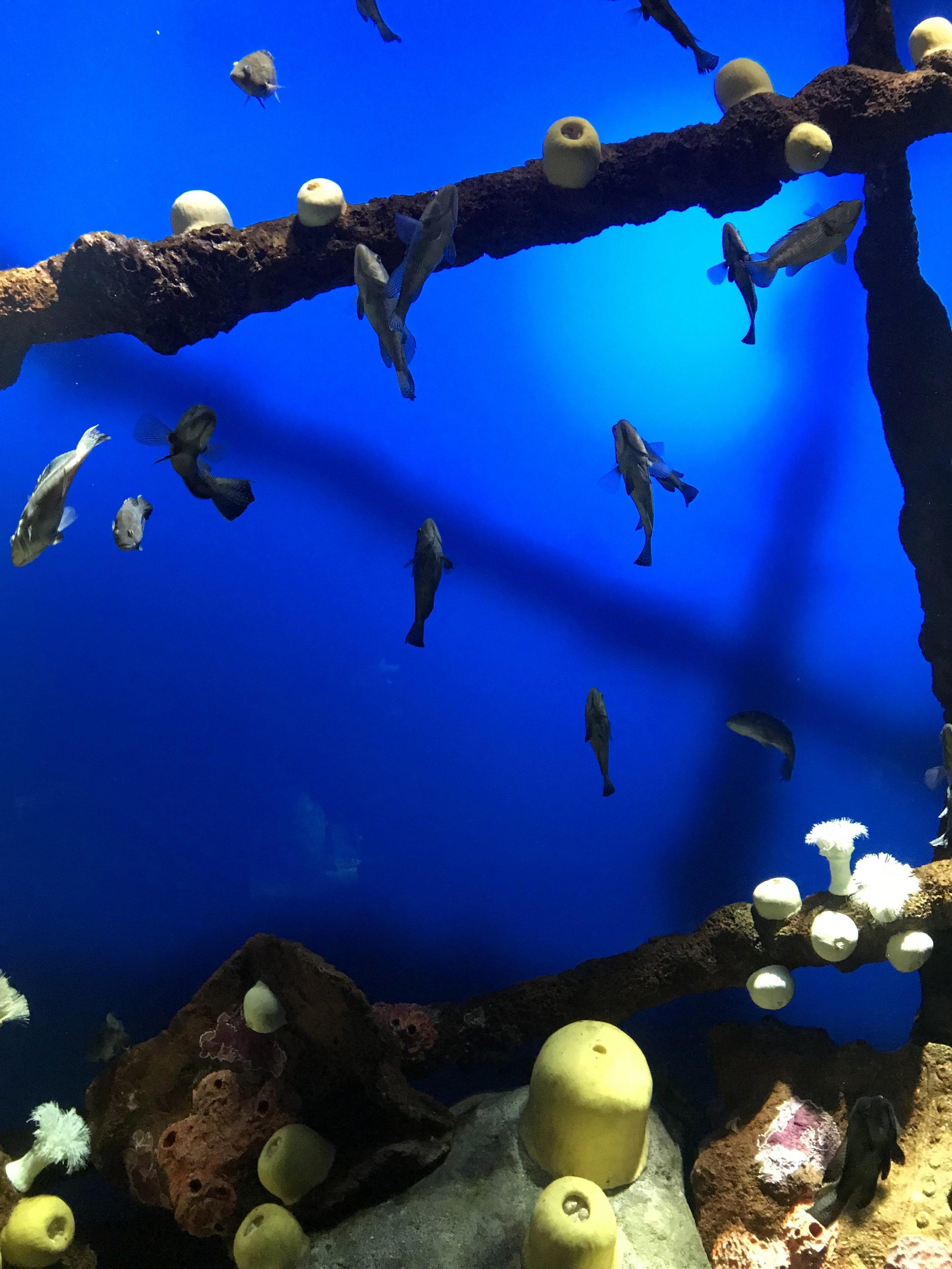 Shipwrecks, 2