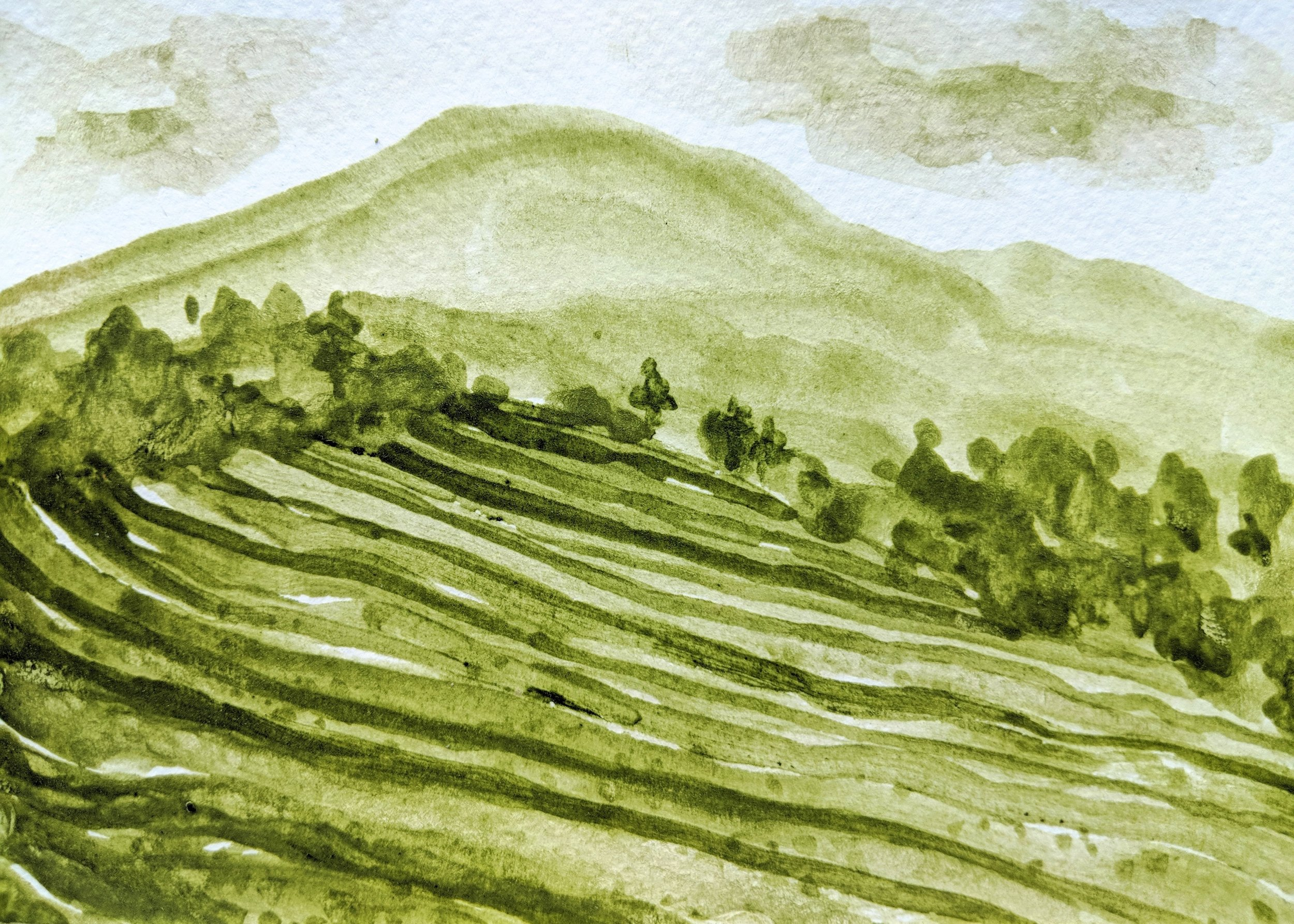 The Dali University Tea Plantation, painted with Matcha from Kunming.