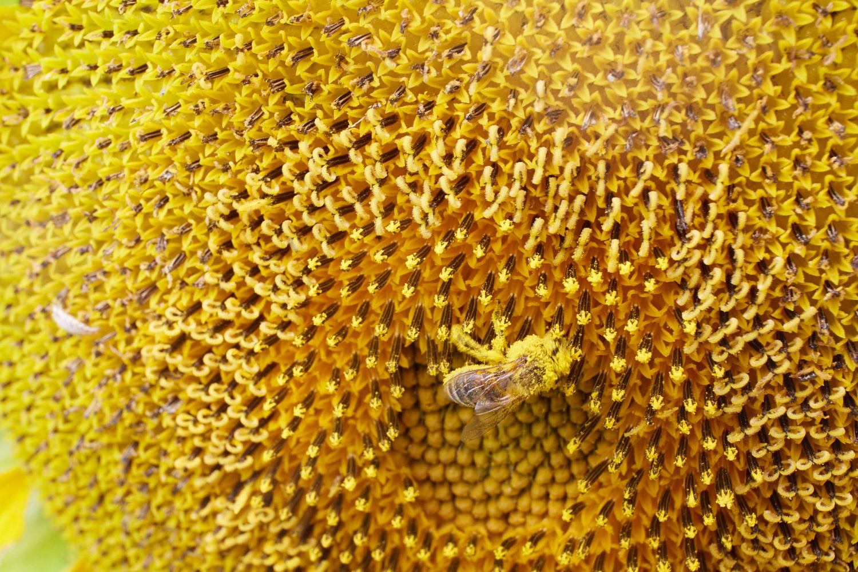 Exploring a Fibonacci Sequence  2016-08-07